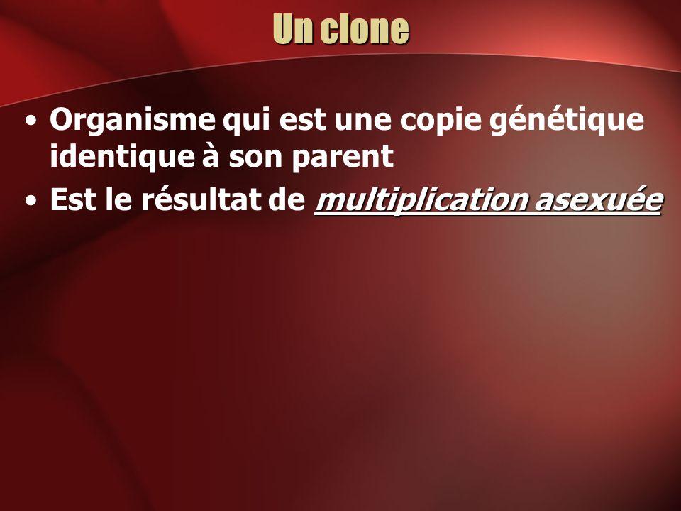 Un clone Organisme qui est une copie génétique identique à son parent