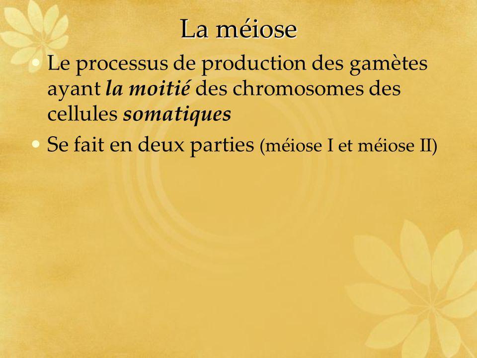 La méiose Le processus de production des gamètes ayant la moitié des chromosomes des cellules somatiques.