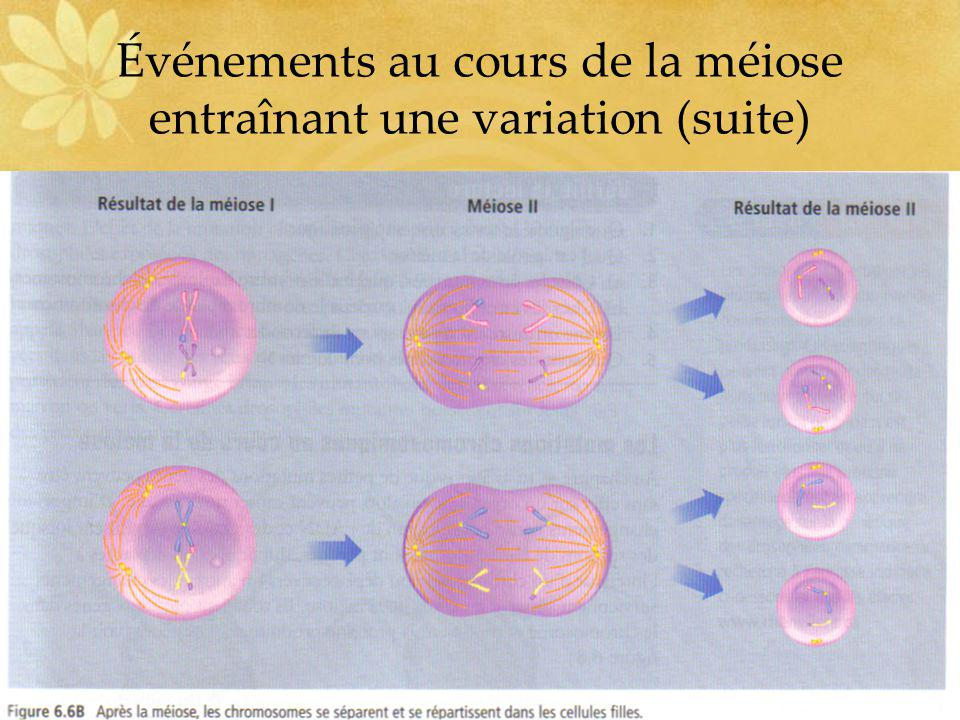 Événements au cours de la méiose entraînant une variation (suite)