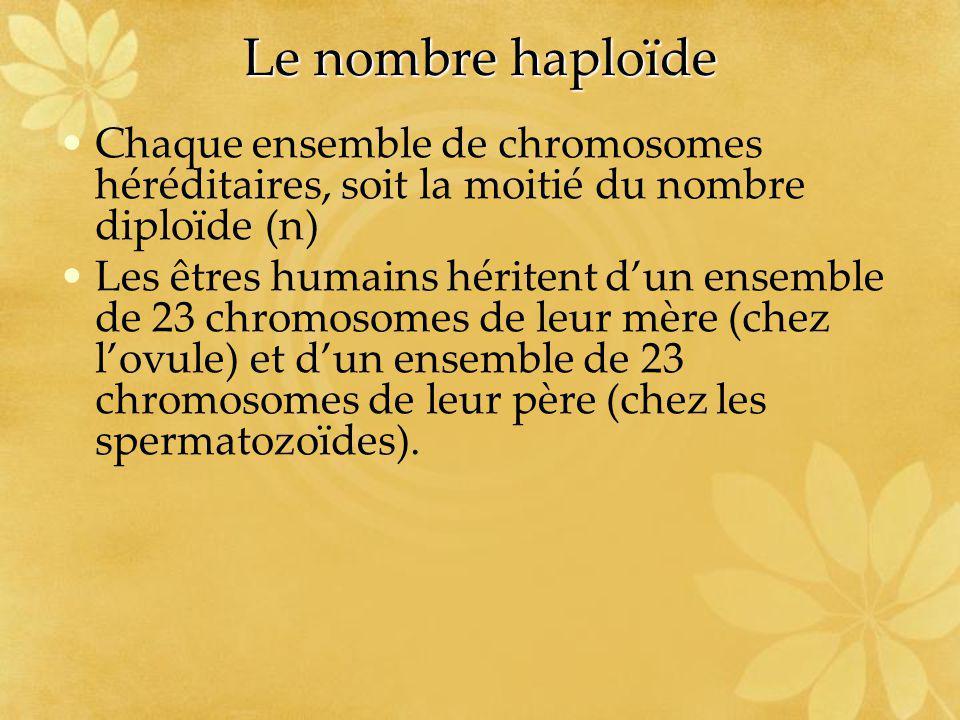 Le nombre haploïde Chaque ensemble de chromosomes héréditaires, soit la moitié du nombre diploïde (n)