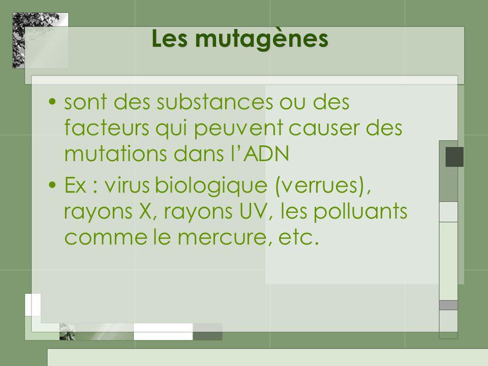 Les mutagènes sont des substances ou des facteurs qui peuvent causer des mutations dans l'ADN.