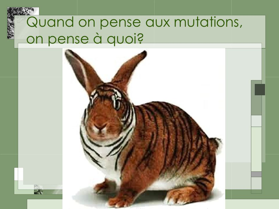 Quand on pense aux mutations, on pense à quoi