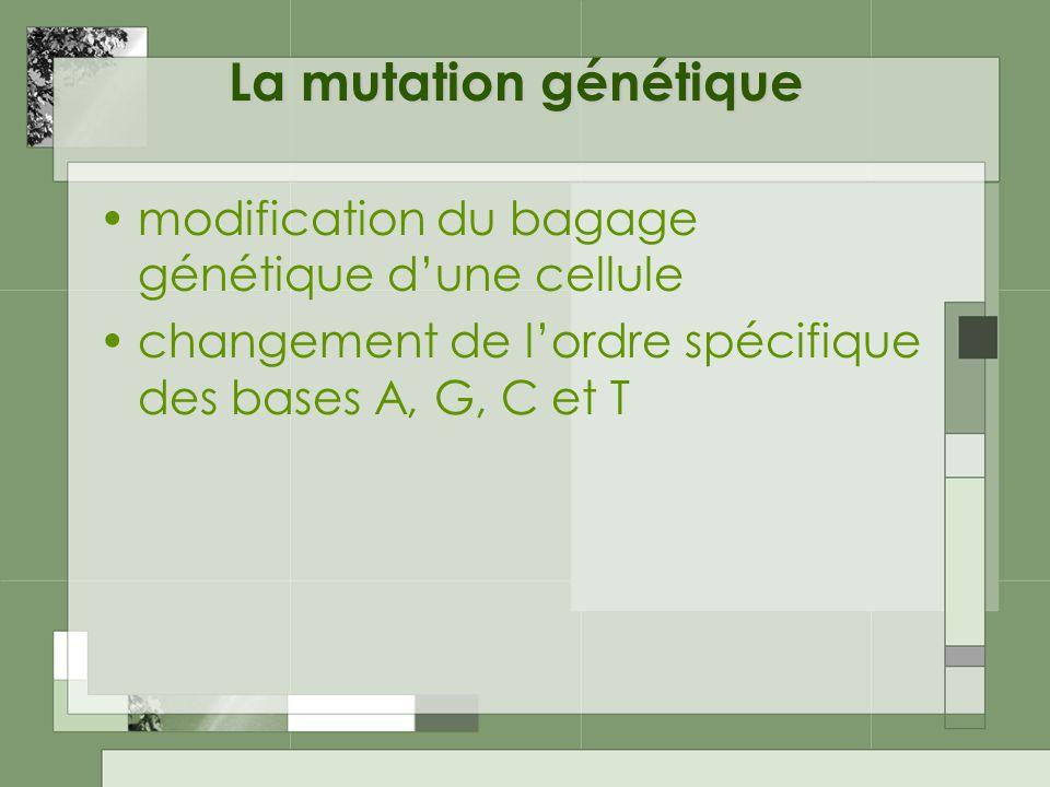 La mutation génétique modification du bagage génétique d'une cellule