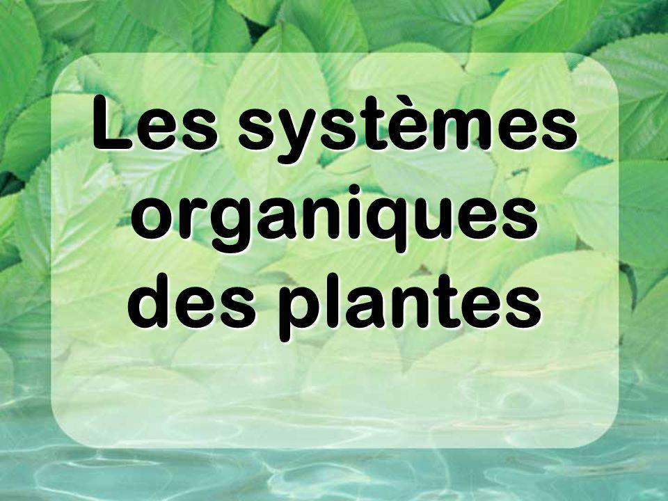 Les systèmes organiques des plantes