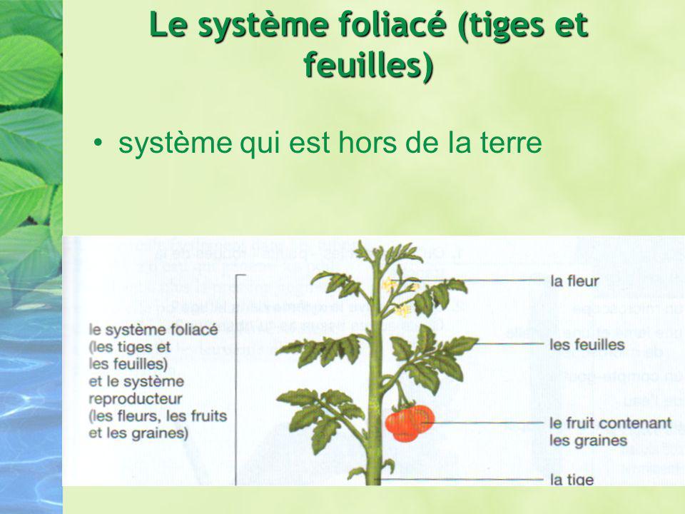Le système foliacé (tiges et feuilles)