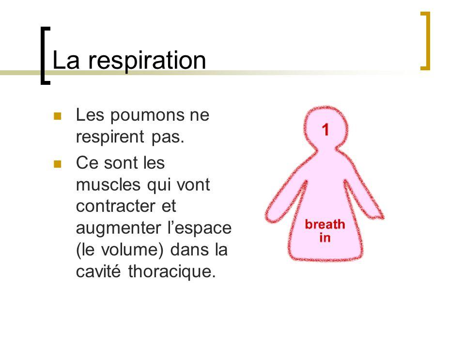 La respiration Les poumons ne respirent pas.