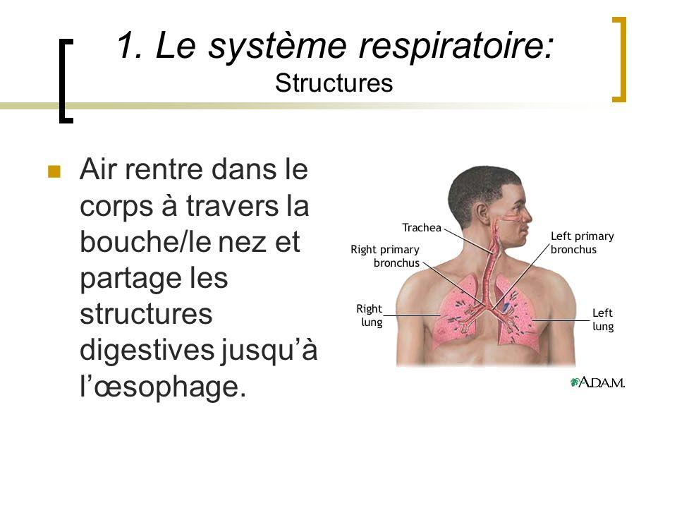 1. Le système respiratoire: Structures