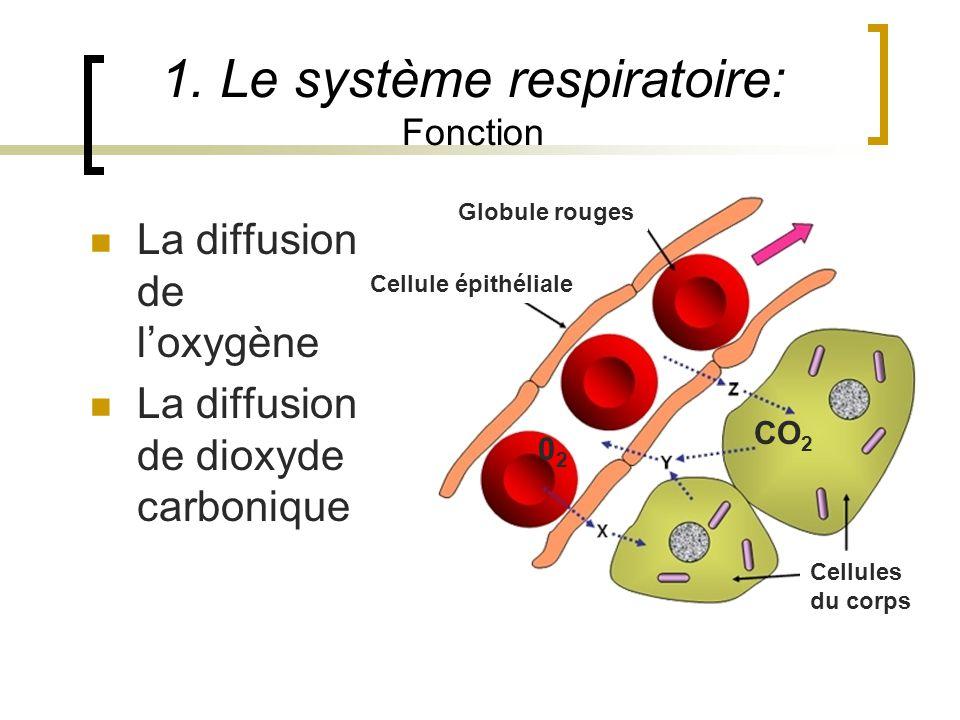1. Le système respiratoire: Fonction