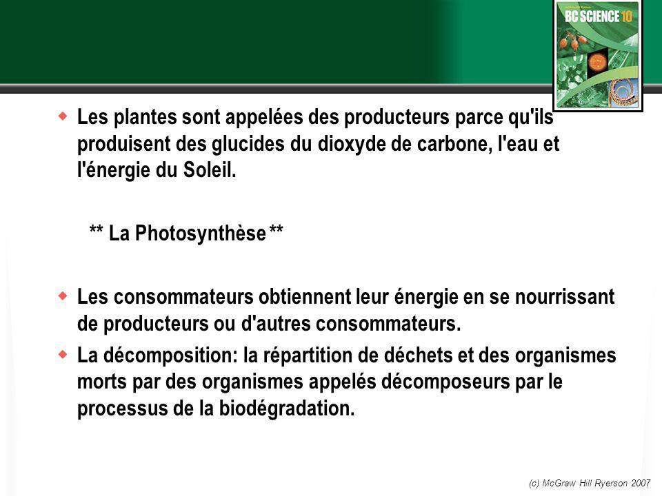 Les plantes sont appelées des producteurs parce qu ils produisent des glucides du dioxyde de carbone, l eau et l énergie du Soleil.
