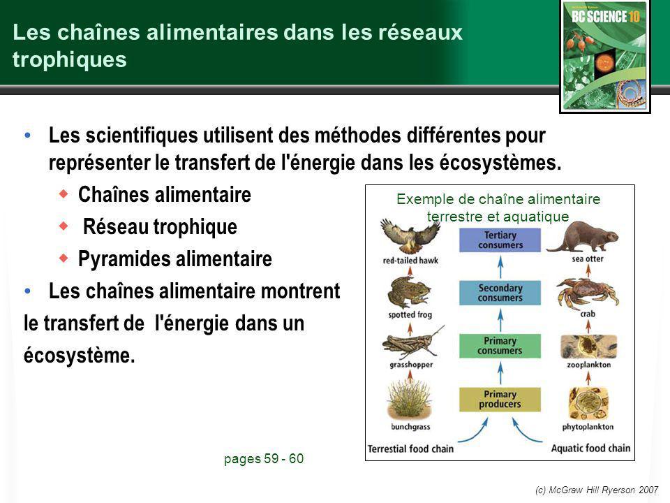 Les chaînes alimentaires dans les réseaux trophiques