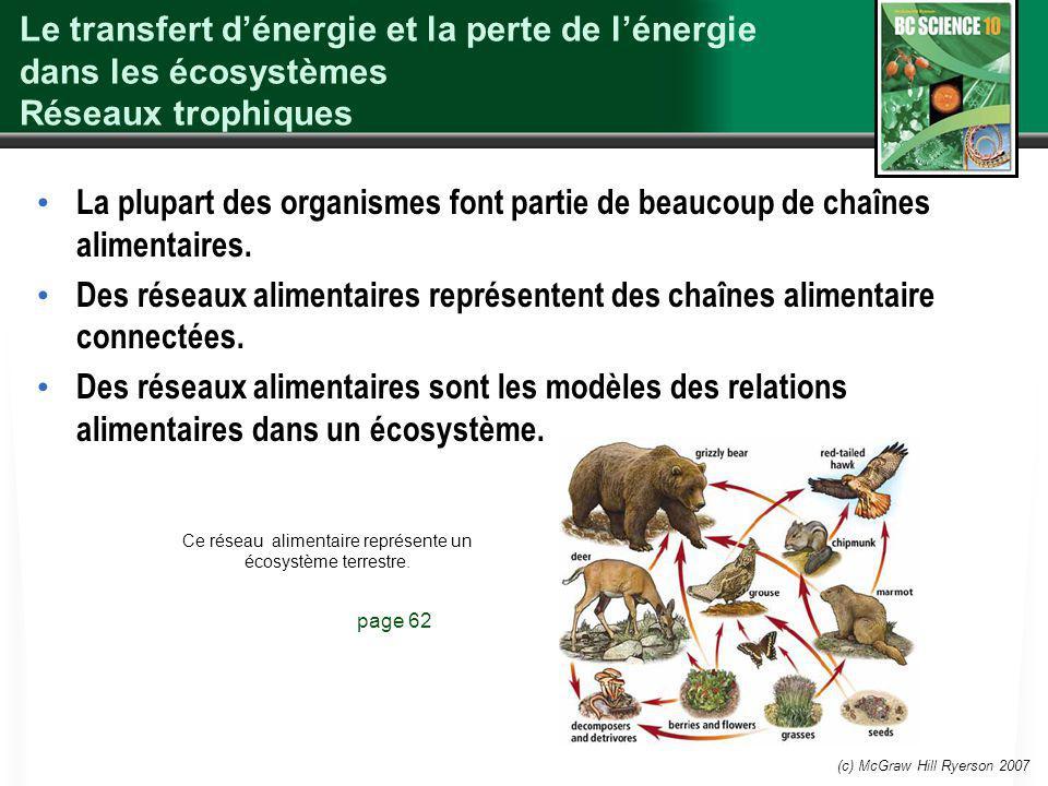 Ce réseau alimentaire représente un écosystème terrestre.