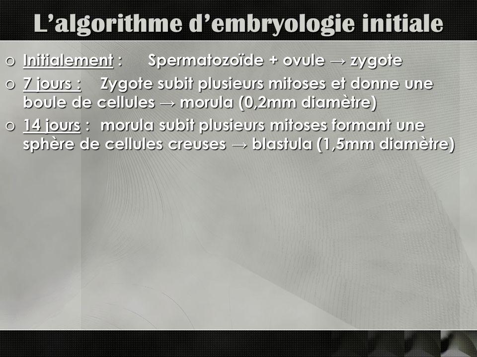 L'algorithme d'embryologie initiale