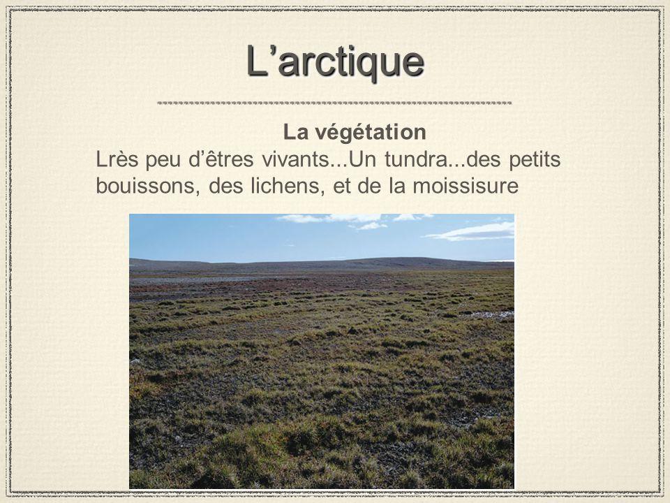 L'arctique La végétation