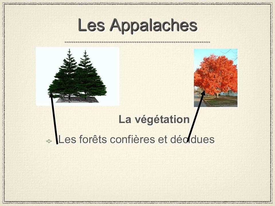 Les Appalaches La végétation Les forêts confières et décidues