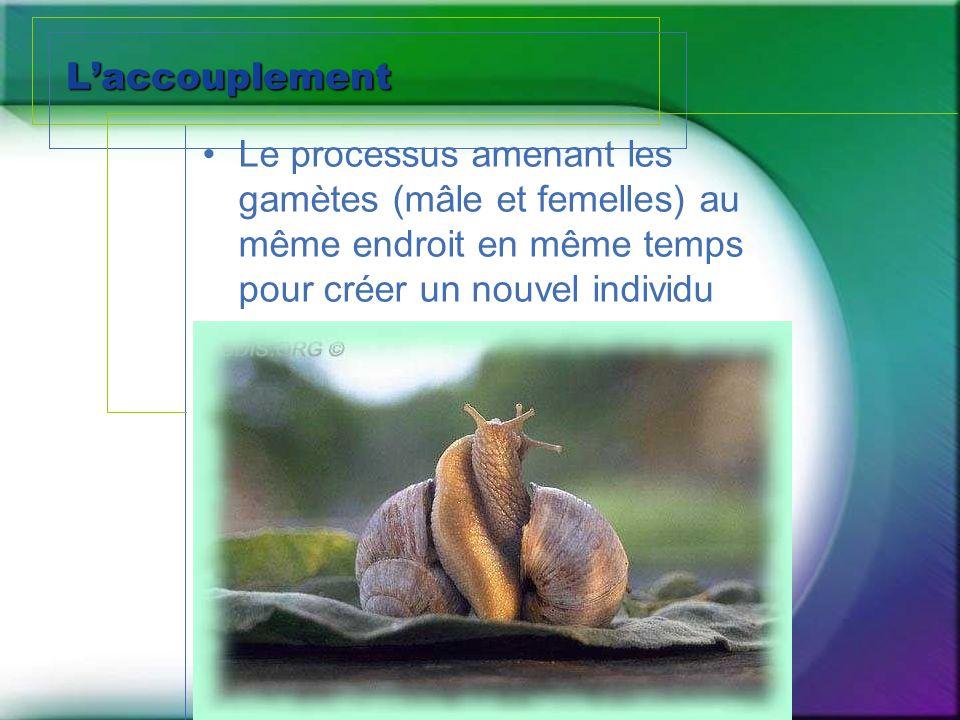 L'accouplement Le processus amenant les gamètes (mâle et femelles) au même endroit en même temps pour créer un nouvel individu.