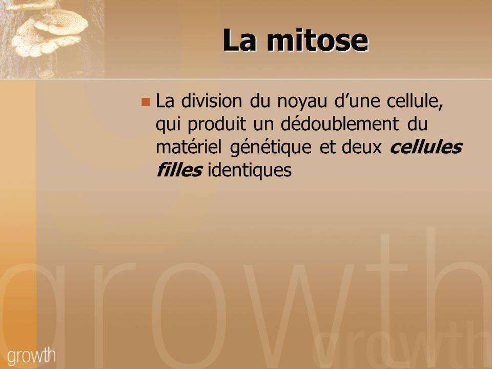 La mitose La division du noyau d'une cellule, qui produit un dédoublement du matériel génétique et deux cellules filles identiques.