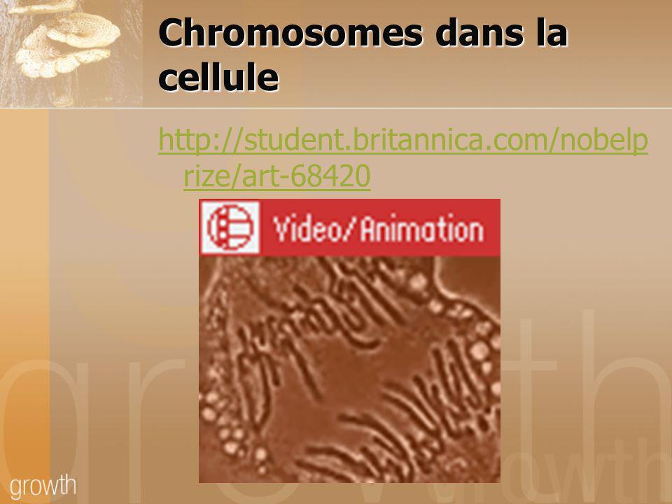 Chromosomes dans la cellule