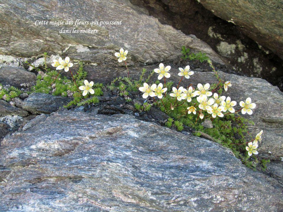 Cette magie des fleurs qui poussent dans les rochers