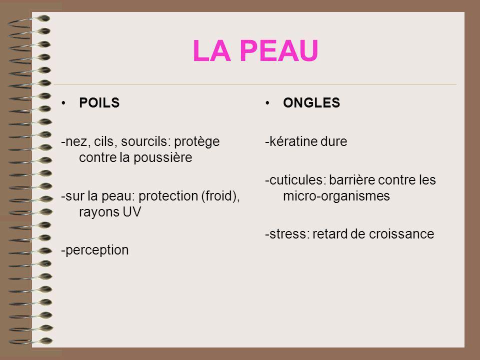 LA PEAU POILS -nez, cils, sourcils: protège contre la poussière