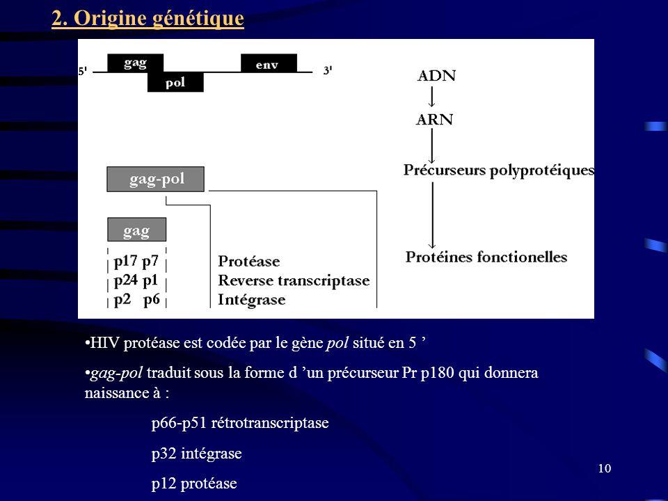 2. Origine génétique HIV protéase est codée par le gène pol situé en 5 '