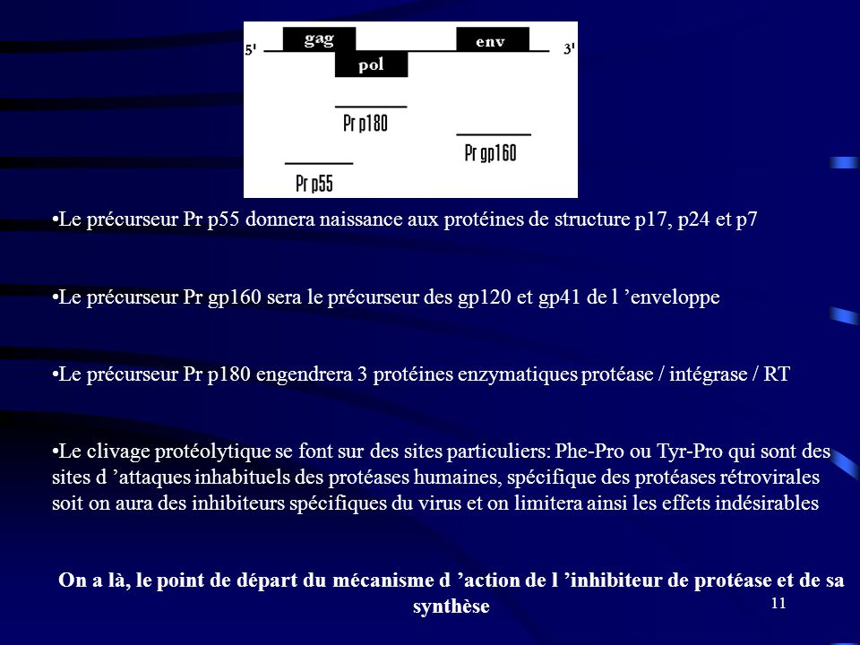Le précurseur Pr p55 donnera naissance aux protéines de structure p17, p24 et p7