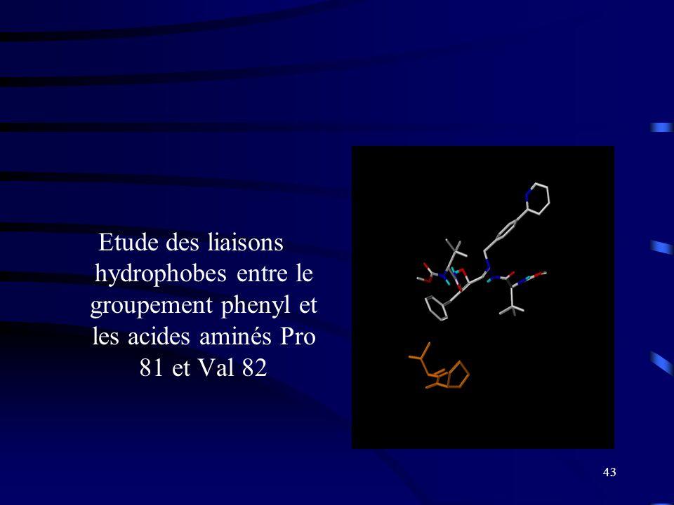 Etude des liaisons hydrophobes entre le groupement phenyl et les acides aminés Pro 81 et Val 82