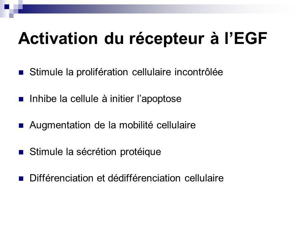 Activation du récepteur à l'EGF