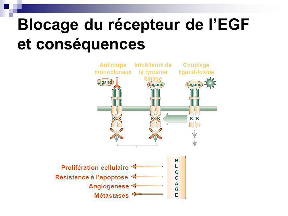 Blocage du récepteur de l'EGF et conséquences