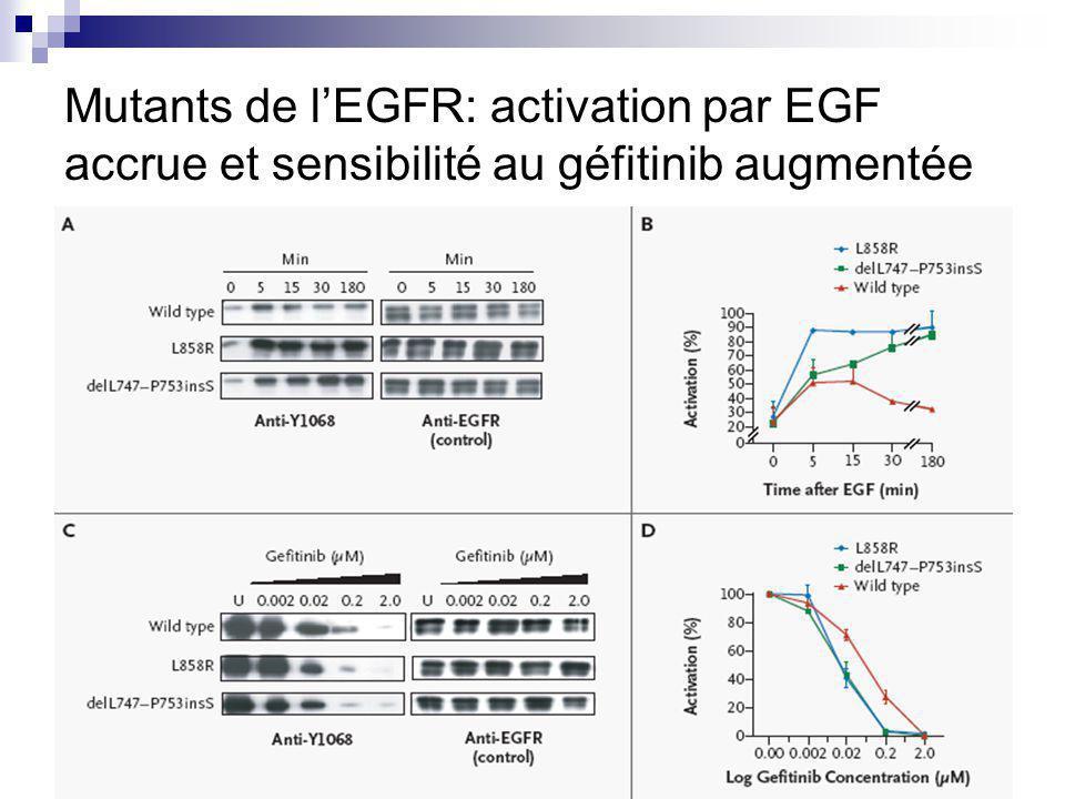 Mutants de l'EGFR: activation par EGF accrue et sensibilité au géfitinib augmentée
