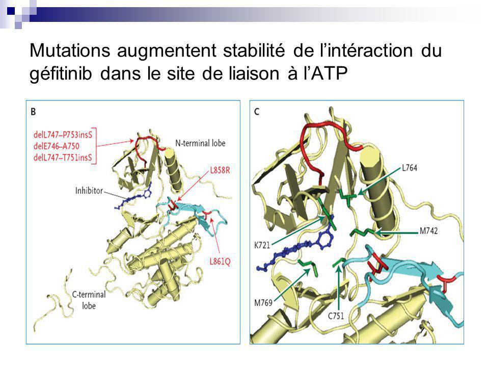 Mutations augmentent stabilité de l'intéraction du géfitinib dans le site de liaison à l'ATP