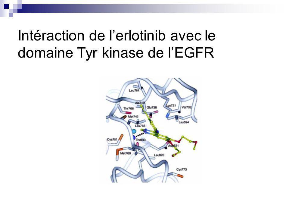 Intéraction de l'erlotinib avec le domaine Tyr kinase de l'EGFR