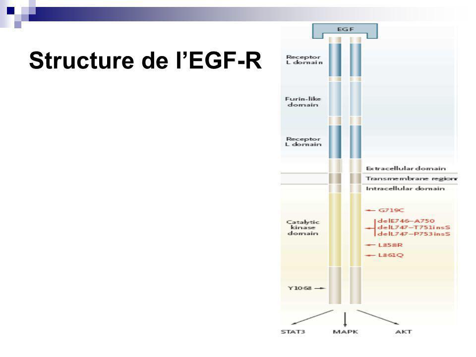 Structure de l'EGF-R