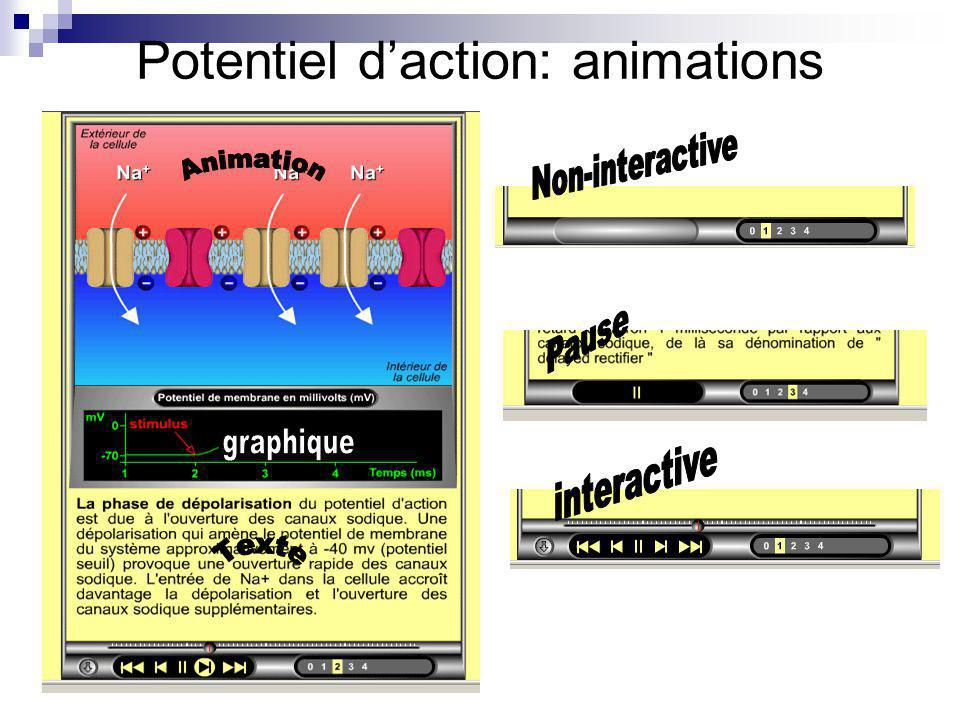 Potentiel d'action: animations