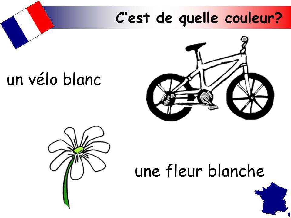 un vélo blanc une fleur blanche C'est de quelle couleur