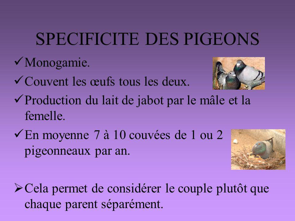 SPECIFICITE DES PIGEONS
