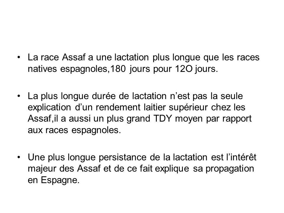 La race Assaf a une lactation plus longue que les races natives espagnoles,180 jours pour 12O jours.