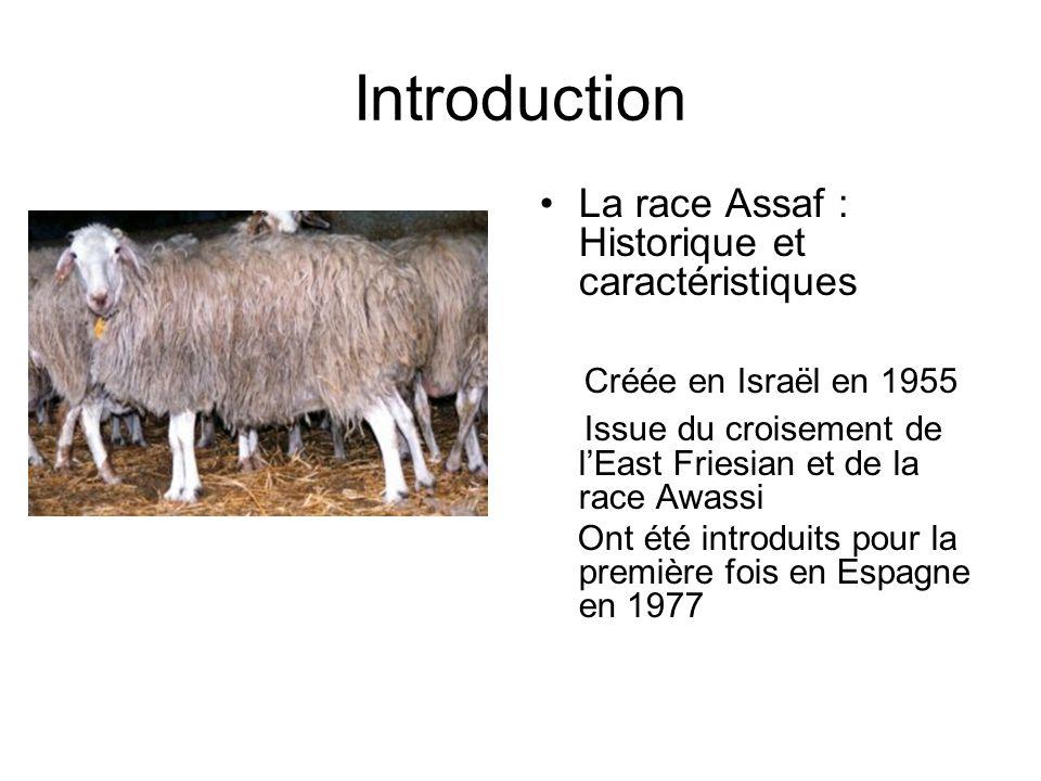 Introduction La race Assaf : Historique et caractéristiques