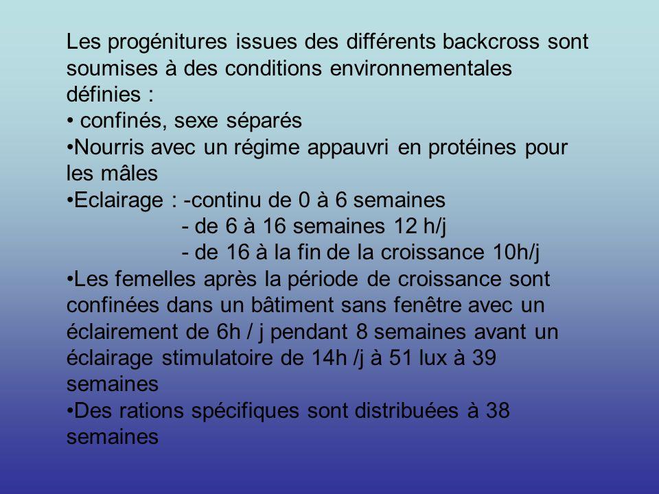 Les progénitures issues des différents backcross sont soumises à des conditions environnementales définies :