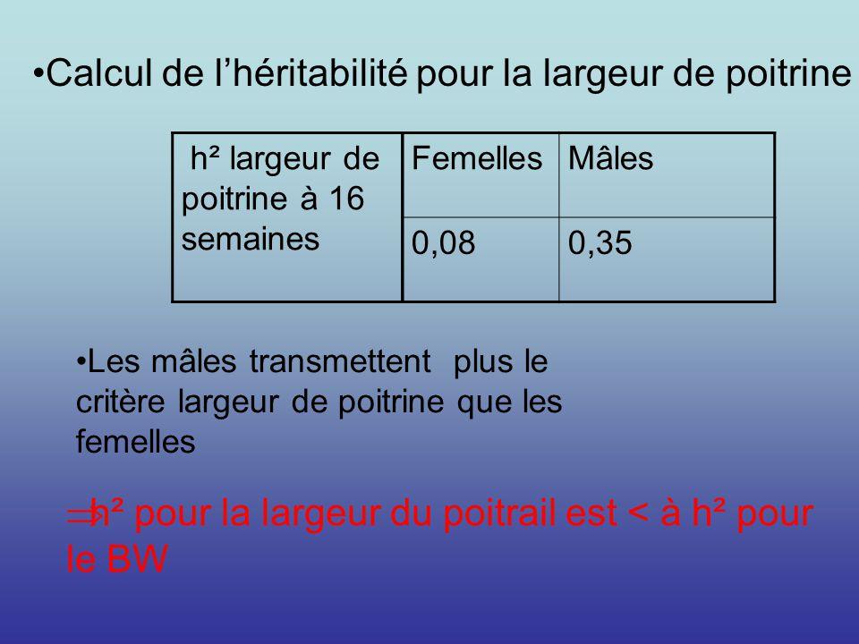 Calcul de l'héritabilité pour la largeur de poitrine