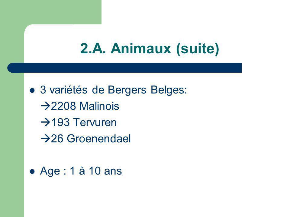 2.A. Animaux (suite) 3 variétés de Bergers Belges: 2208 Malinois