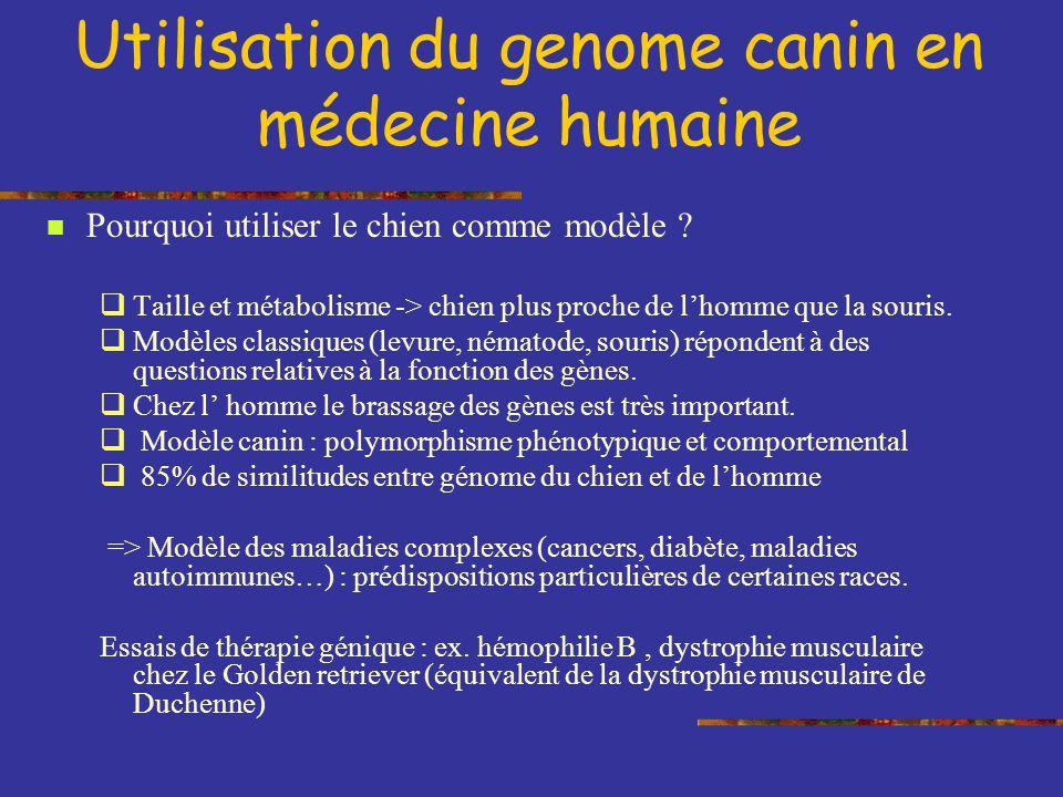 Utilisation du genome canin en médecine humaine