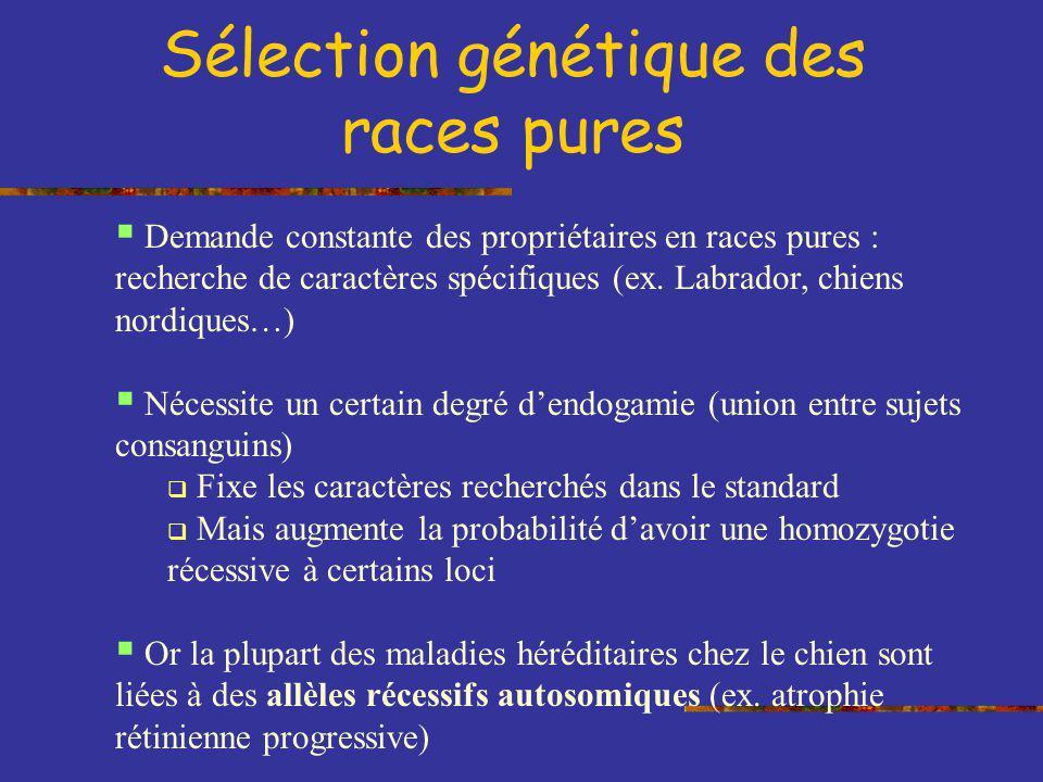 Sélection génétique des races pures