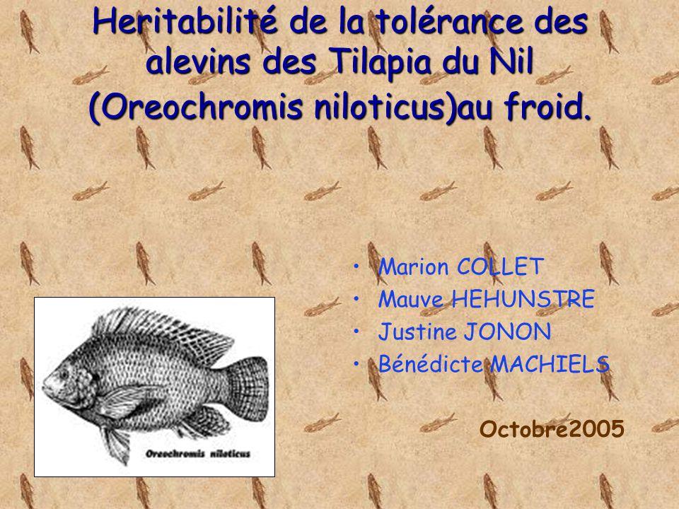 Heritabilité de la tolérance des alevins des Tilapia du Nil (Oreochromis niloticus)au froid.