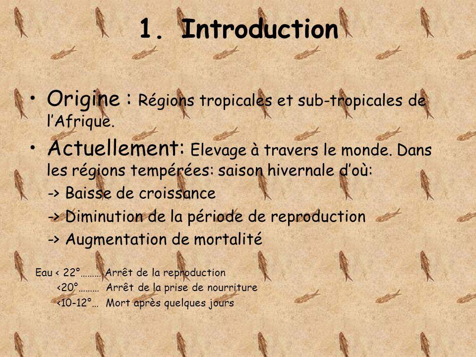 Introduction Origine : Régions tropicales et sub-tropicales de l'Afrique.