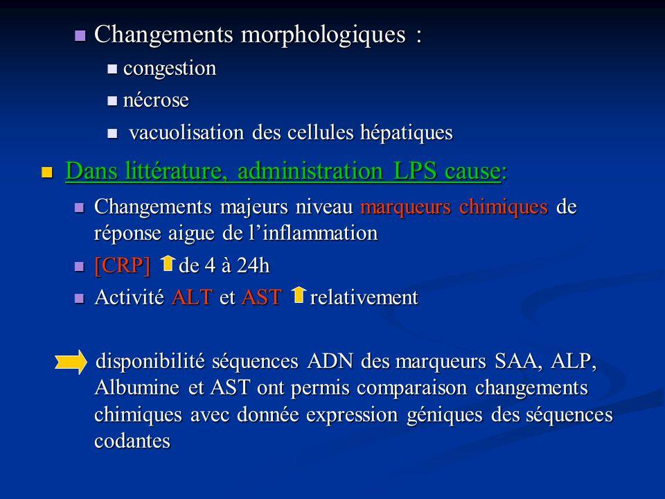 Changements morphologiques :