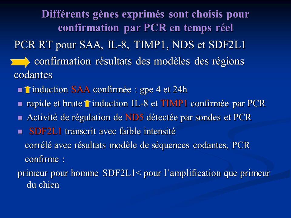PCR RT pour SAA, IL-8, TIMP1, NDS et SDF2L1