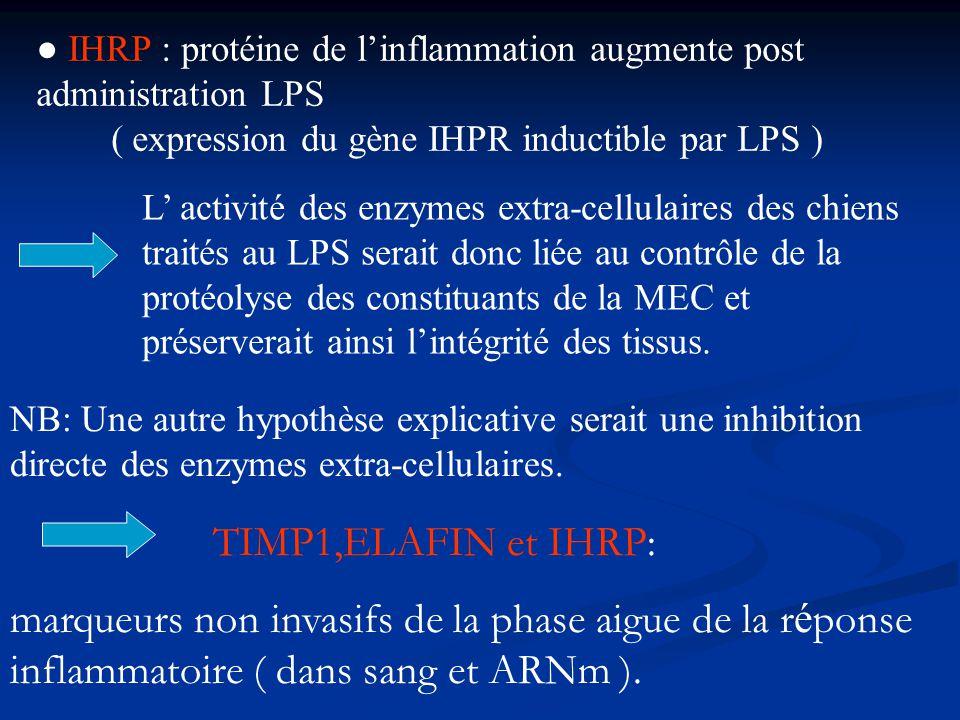 ● IHRP : protéine de l'inflammation augmente post administration LPS