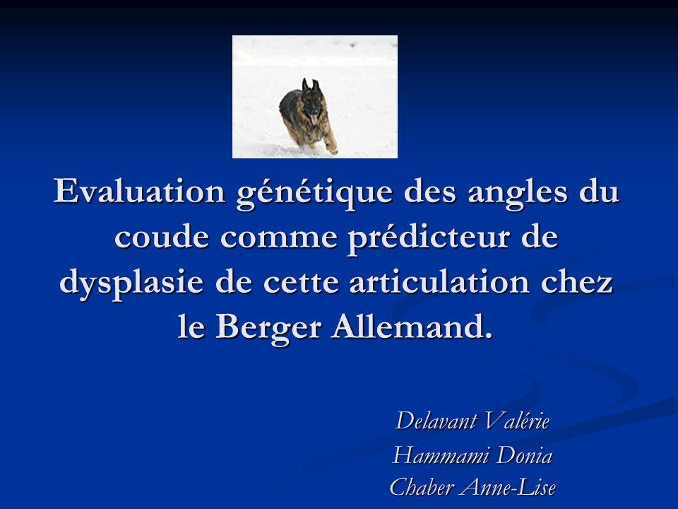 Evaluation génétique des angles du coude comme prédicteur de dysplasie de cette articulation chez le Berger Allemand.
