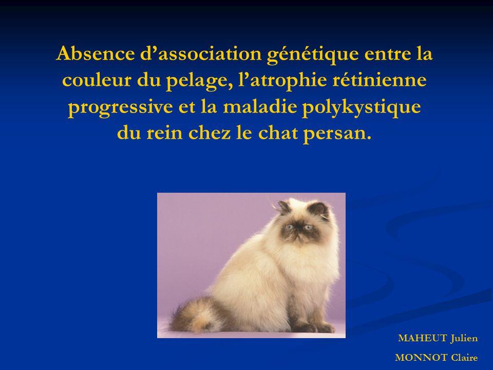 Absence d'association génétique entre la couleur du pelage, l'atrophie rétinienne progressive et la maladie polykystique du rein chez le chat persan.