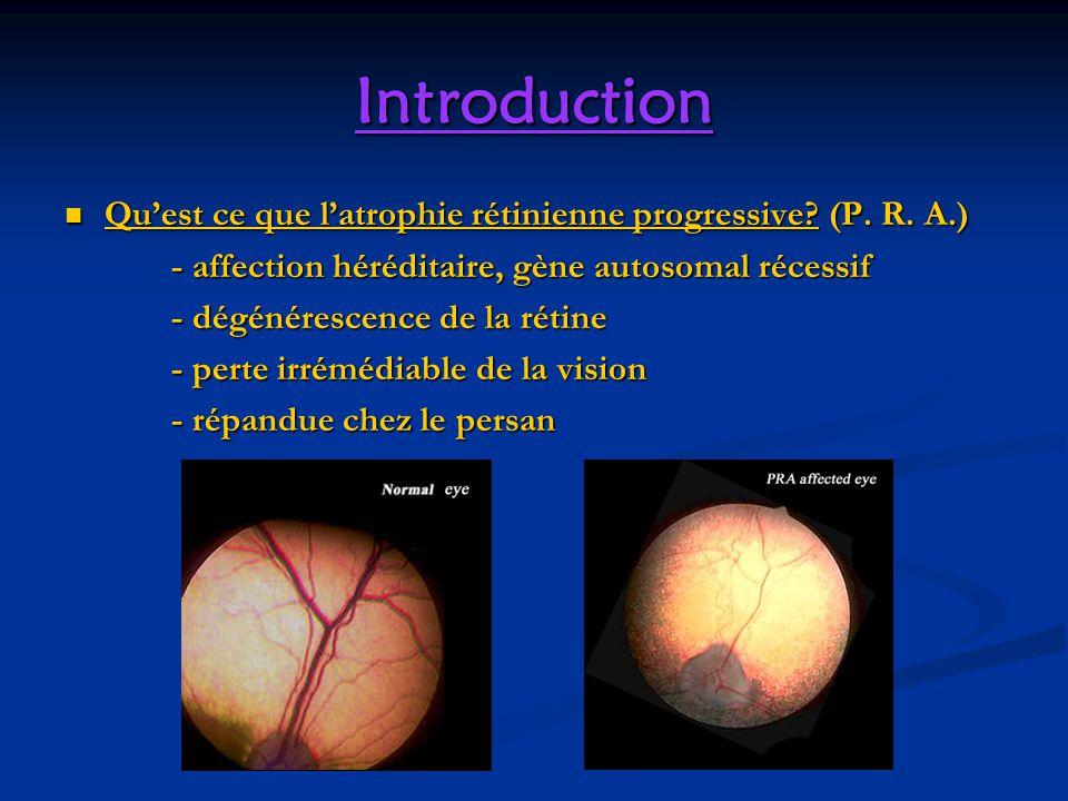 Introduction Qu'est ce que l'atrophie rétinienne progressive (P. R. A.) - affection héréditaire, gène autosomal récessif.
